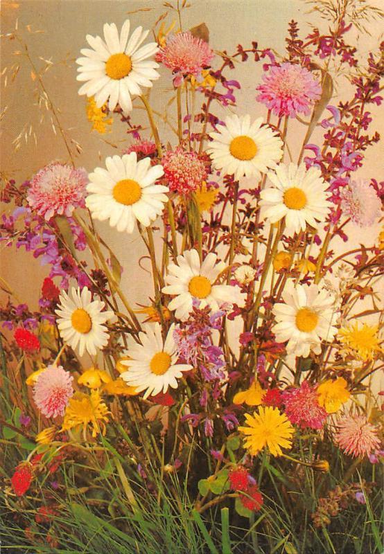 Daisy marguerite flowers, fleurs, blumen souvenir 1982
