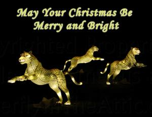 Set of 12 Fine Art Christmas Postcards, Cheetah Family Night May Your Christmas