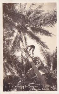 Climbing Coconut Tree For Coconuts Hawaiian Islands Real Photo