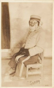 RP: DAYTON , Ohio , 1920-30s ; Sammy the Chimp