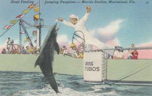 MARINELAND, Florida, 30-40s; Hand Feeding,  Jumping Porpoises,  Marine Studios