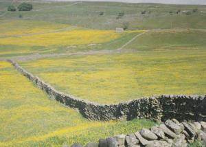 Mallerstang Valley Yorkshire Upper Eden Rare Postcard