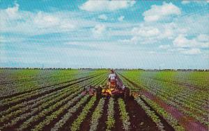 Florida Everglades Farming Winter Vegetables