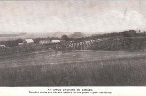 Canada Canadian An Apple Fruit Orchard Antique Postcard