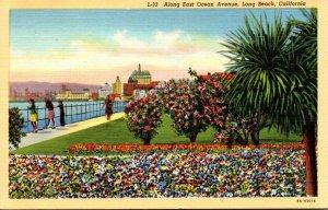 California Long Beach View Along East Ocean Avenue Curteich
