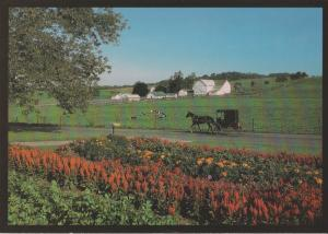 Postcard OHIO'S AMISH COUNTRY Horse Scenic Flora