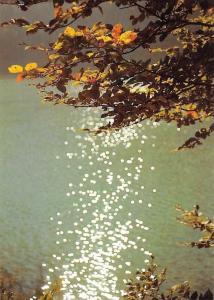 Erste Herbstblatter im Gegenlich Foto: Peter Friebe, Autumn Leaves Lake