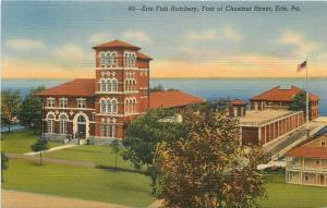 Erie Pennsylvania~Fish Hatchery @ Foot of Chestnut St 1940s PC