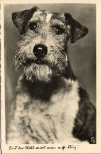 Dog Postcard Terrier (1930s) RPPC (3)
