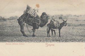 Souvenir de Smyrne (Ottoman Empire now Turkey) Chameaux Pehlavan (Lutter) , 0...