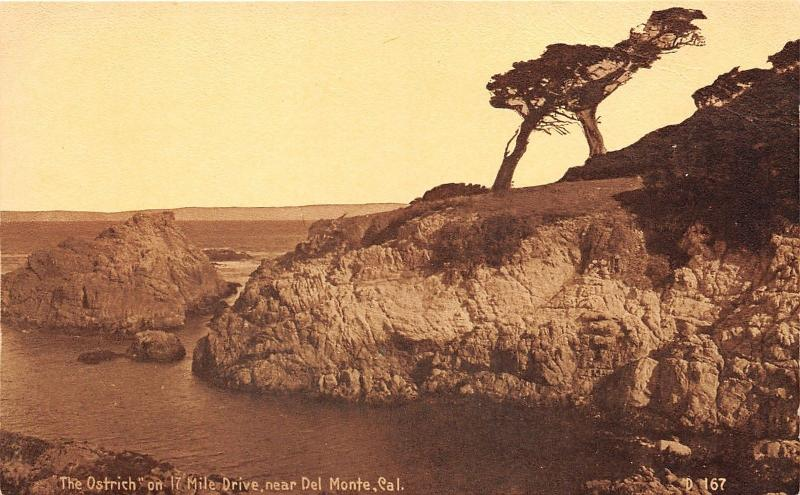 Del Monte California~The Ostrich on 17 Mile Drive~Rock Cliff by Ocean~1910 PC
