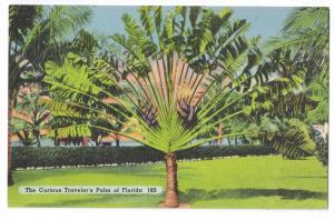 Travelers Palm Florida 1940 Tichnor Linen
