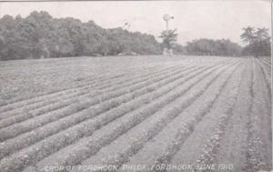 Advertising Crop Of Fordhook Phlox June 1910 W Atlee Burpee & Company Philade...