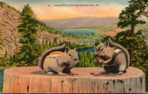 Pennsylvania Squirrels I Am Nutty Over The Pocono Mountains 1946