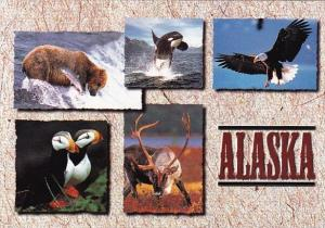 Alaska Anchorage Wildlife Abounds In Alaska