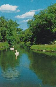 Swans , Wild Animal Park , MOOSE JAW , Saskatchewan , Canada ,50-60s