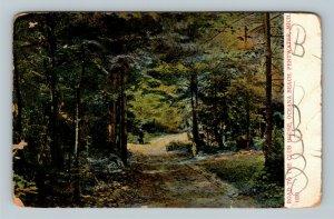 Pentwater MI, Road To Club House, Oceana Beach, Vintage Michigan Postcard