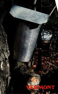 Vermont Sap Bucket Hanging From Maple Tree