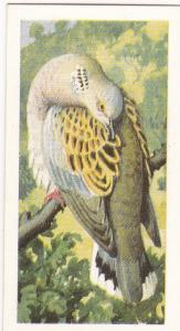 Trade Card Brooke Bond Tea Wild Birds in Britain 20 Turtle Dove