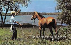 Texas Cowboy & his Horse Lake Benbrook, Fort Worth, TX Postcard Post Card Lak...