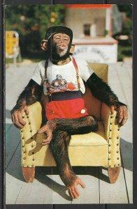 Florida - Chimpanzee - Mokey Jungle - [FL-629]