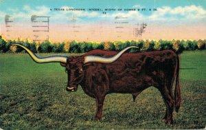 USA A Texas Longhorn Steer 04.91