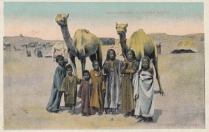 Camels & Bichareens in Upper EGYPT , 1901-07