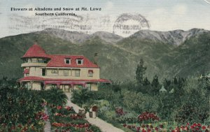 MT. LOWE, California, PU-1913; Flowers At ALtadena And Snow At Mt. Lowe
