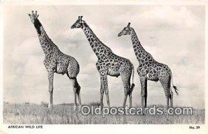 African Wild Life Postcard Post Card 1956
