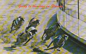 Florida Hollywood Dog Track Dog Racing