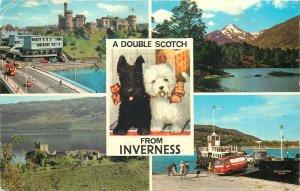 Scotland Postcard Inverness different aspects dog