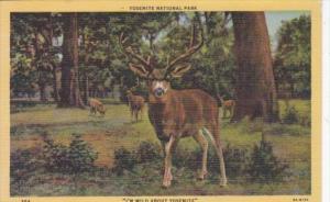 Mule Deer Yosemite National Park Curteich