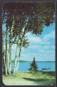 Birches Trees MI BIN