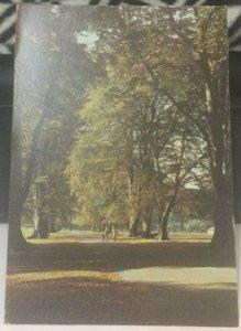 England Dunham Park Main Avenue Dunham Massey Hall - posted 1980