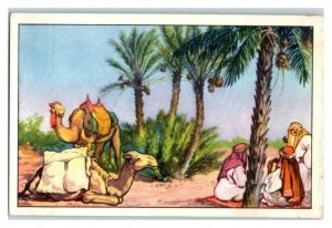 Dates, North Africa, Nourishing Food, Echte Wagner German Trade Card *VT31U