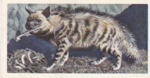 Trade Card Brooke Bond Tea Asian Wild Life No 23 Striped Hyena