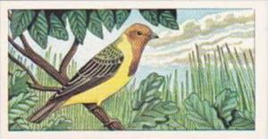 Glengettie Tea Trade Card Rare British Birds No 10 Red-Headed