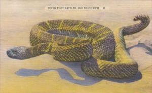 Snakes Seven Foot Rattler In Ole Southwest