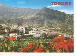 Postal 049740 : Tenerife (Canarias). Los Realejos