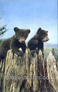 Lake Placid, NY USA Bear Postcard,  Bear Post Card Old Vintage Antique  Lake ...