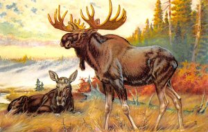 Moose / Elk Post Card Painted by WJ Wilwerding Unused