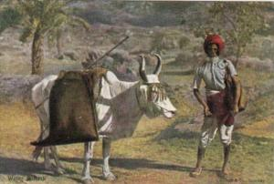 India Native With Water Bullock