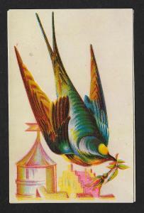 VICTORIAN TRADE CARDS (2) Stock Cards Birds