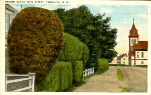 Canada - Nova Scotia, Yarmouth. Hedges Along Main Street