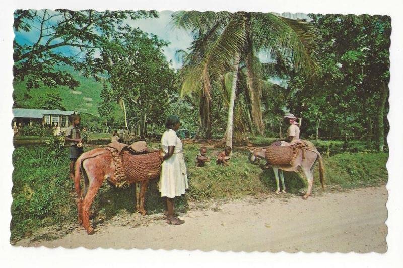 Jamaica Women going to Market Mule Donkey Vtg Postcard