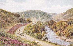 POWY, Wales, 1900-1910s; Rhayader On The Wye