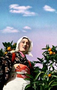 Japan - Orange Grove Scene