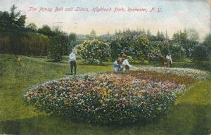 Pansy Bed and Lilacs at Highland Park, Rochester, New York - pm 1908 - DB