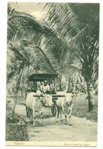 Ox pulled Buggy, Ceylon, 00-10s   Bullock travelling wagon