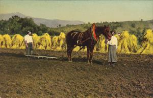 Harvest Scene Hay Making Horse And Plow